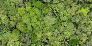 Institutoa Socio Ambiental